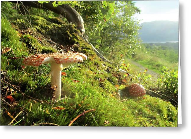 Magical Mushrooms 1 Greeting Card by The Rambler