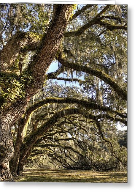 Magnificant Live Oak Trees Color Greeting Card by Dustin K Ryan