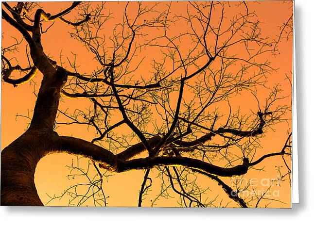 Tree Roots Greeting Cards - Magnificent Tree Greeting Card by Light Engraver