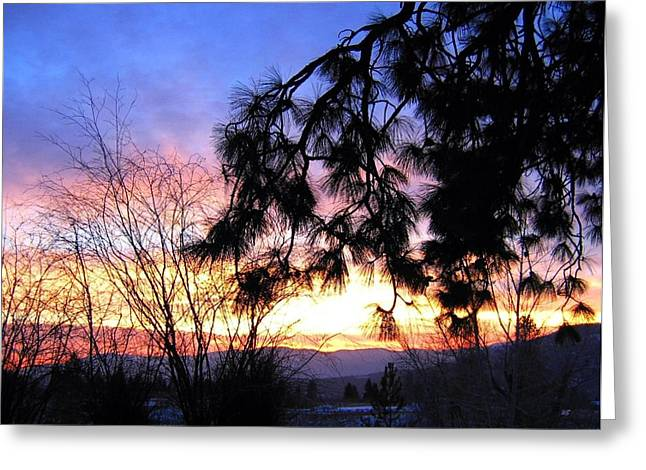 Pine Needles Greeting Cards - Magnificent Winter Sky Greeting Card by Will Borden