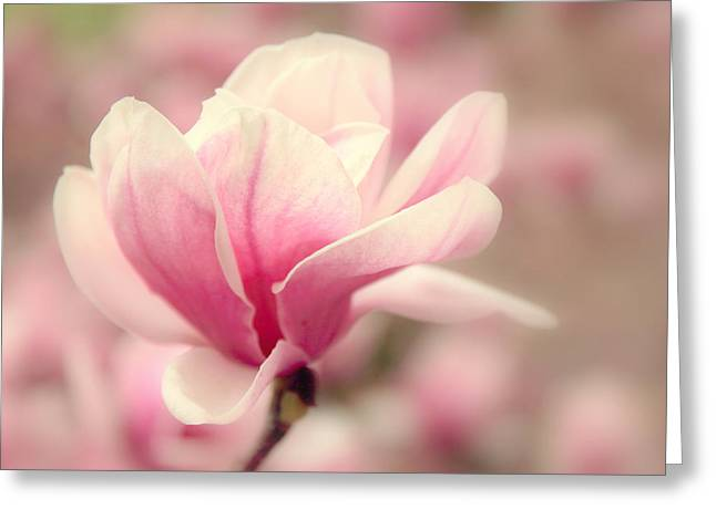 Magnolia Tree Greeting Cards - Magnolia Blossom Greeting Card by Jessica Jenney