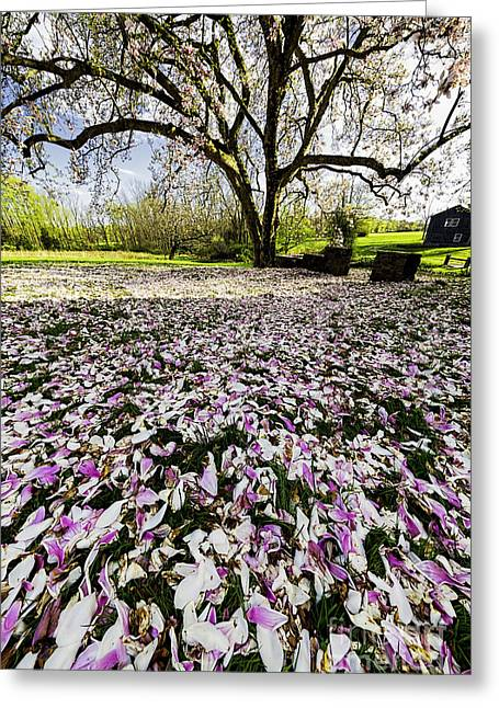 Hunterdon County Greeting Cards - Magnolia Flower Carpet  Greeting Card by George Oze