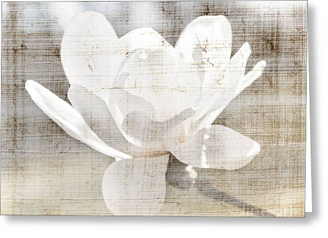 Sunlit Greeting Cards - Magnolia flower Greeting Card by Elena Elisseeva