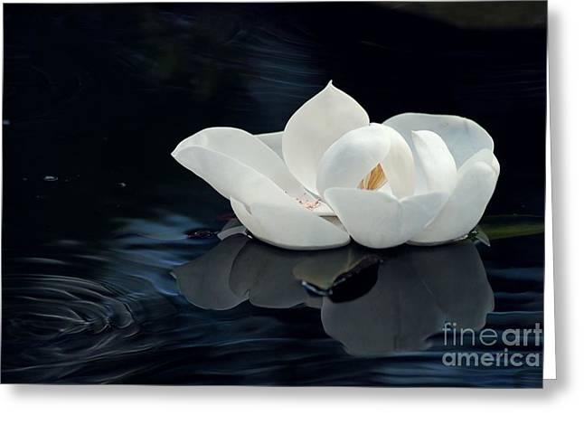 Clean Water Digital Art Greeting Cards - Magnolia Greeting Card by Kendra Longfellow