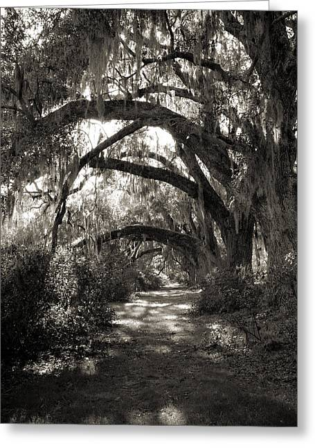 Moss Greeting Cards - Magnolia Live Oak Tree with Spanish Moss Greeting Card by Dustin K Ryan