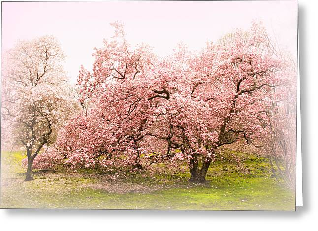 Magnolia Tree Greeting Cards - Magnolia Mist Greeting Card by Jessica Jenney