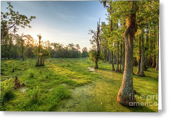 Southern Scene Greeting Cards - Magnolia Plantation Cypress Swamp Sunrise Greeting Card by Dustin K Ryan