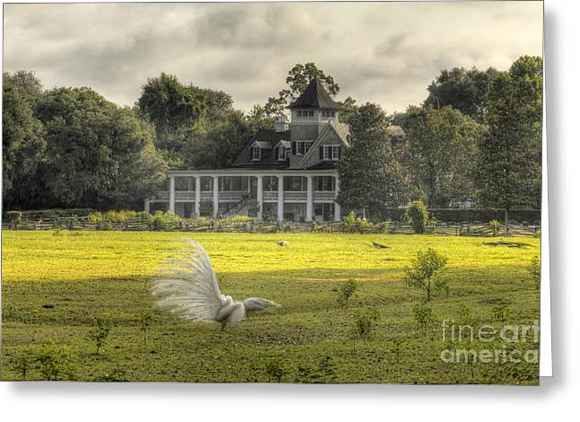 Southern Scene Greeting Cards - Magnolia Plantation House Greeting Card by Dustin K Ryan