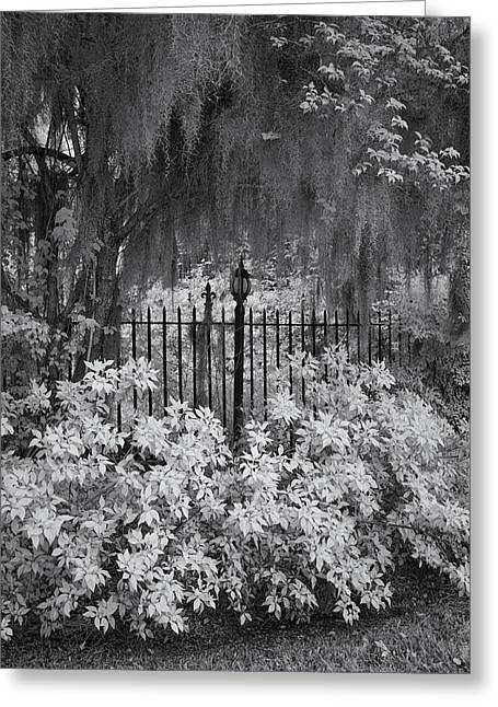 South Carolina Infrared Landscape Greeting Cards - Magnolia Plantation Lightpost Greeting Card by Cindy Archbell