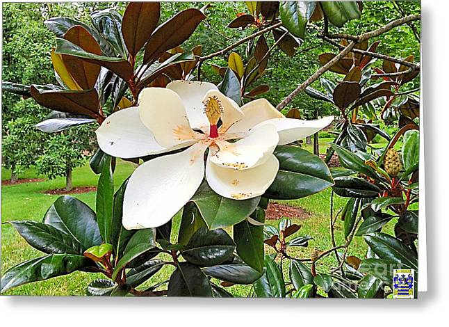 Usa Digital Greeting Cards - Magnolia Splendor Greeting Card by Casavecchia Photo Art