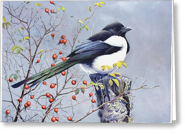 Magpie Greeting Cards - Magpie Greeting Card by Dag Peterson