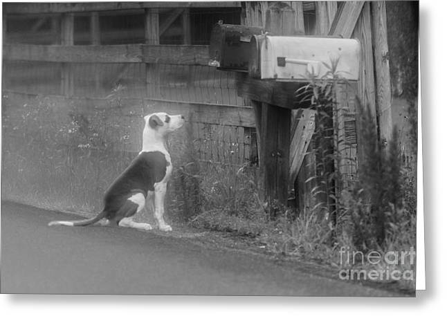 Streets Tapestries - Textiles Greeting Cards - Mail Dog Greeting Card by James Hennis