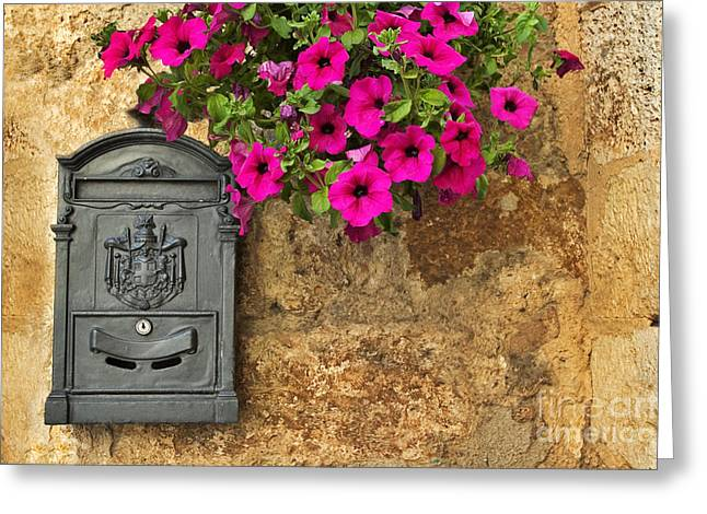 Silvia Ganora Greeting Cards - Mailbox with petunias Greeting Card by Silvia Ganora