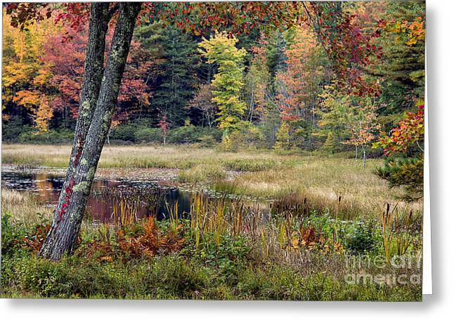 Mt. Desert Island Greeting Cards - Maine Autumn Greeting Card by John Greim