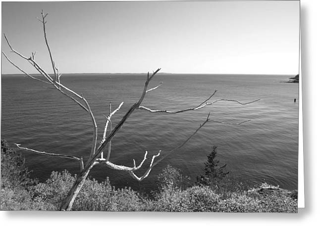 Fall Trees Greeting Cards - Maine Coastline Greeting Card by Corinne Rhode