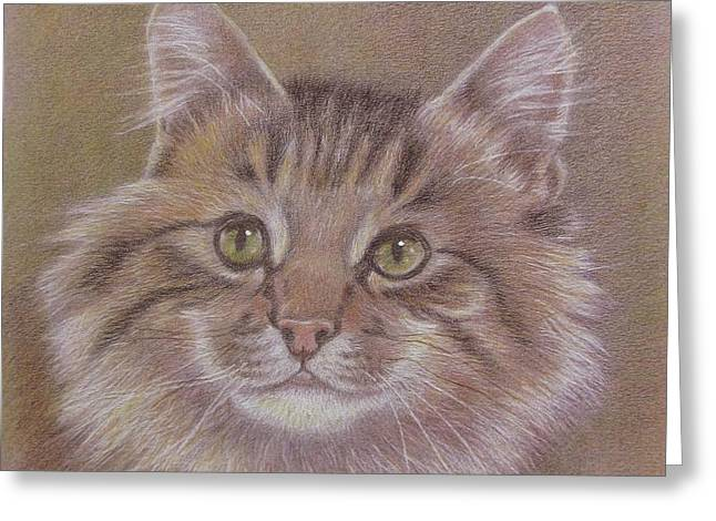 Maine Coon Cat Greeting Card by Dorothy Coatsworth