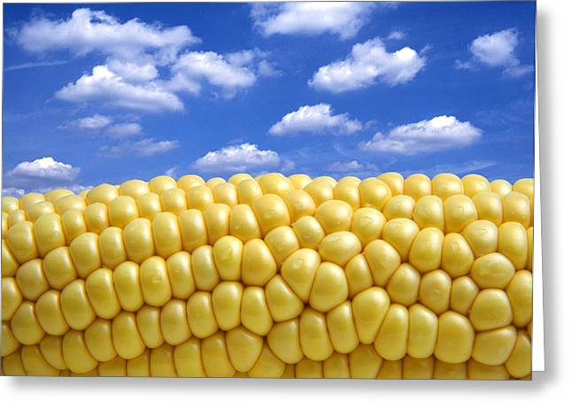 Corn Greeting Cards - Maize Greeting Card by Victor De Schwanberg