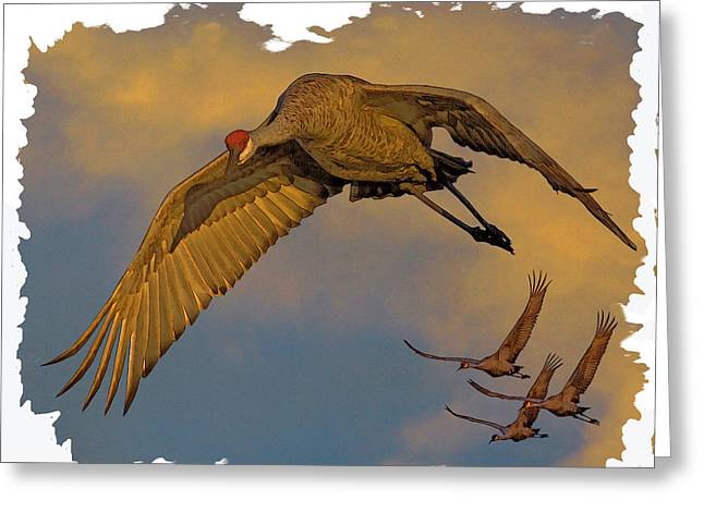 Sandhill Cranes Greeting Cards - Majestic Flight Greeting Card by Larry Linton