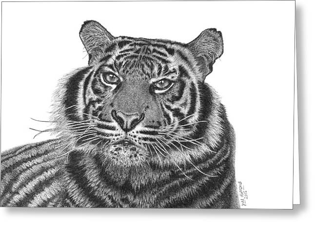 Pen And Ink Drawing Greeting Cards - Majestic Greeting Card by Jill Dimond