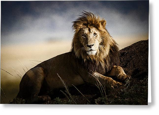 Mound Greeting Cards - Majestic Male On Mound Greeting Card by Mike Gaudaur
