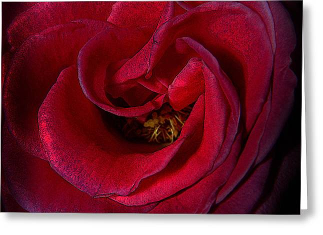 Bruster Greeting Cards - Majestic Rose Greeting Card by Clayton Bruster