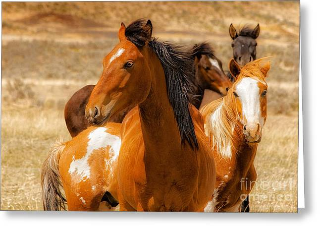 Beautiful Equine Photos Fine Art Greeting Cards - Majestic Wild Stallion Greeting Card by Jerry Cowart