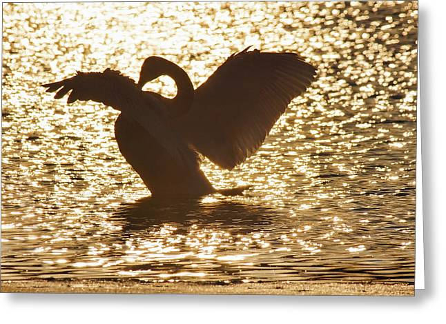 Trumpeter Silhouette Greeting Cards - Majesty Greeting Card by Leda Robertson