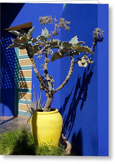 Majorelle Blue And Plants Greeting Card by Aivar Mikko