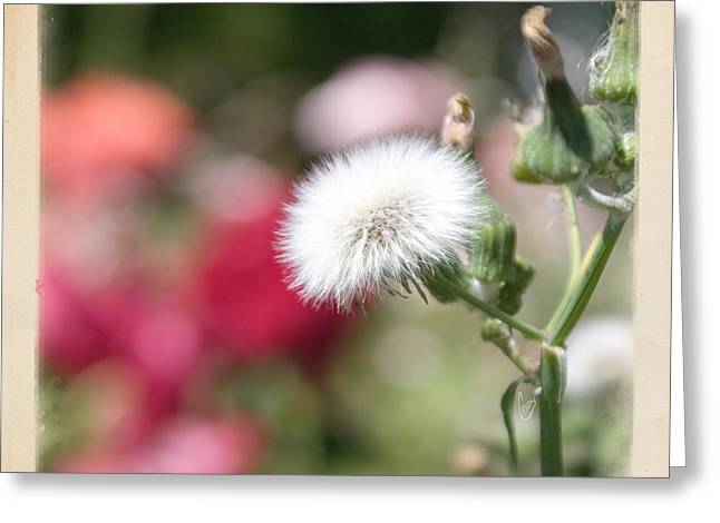 Wishes Greeting Cards - Make a wish... Greeting Card by Cindy Garber Iverson
