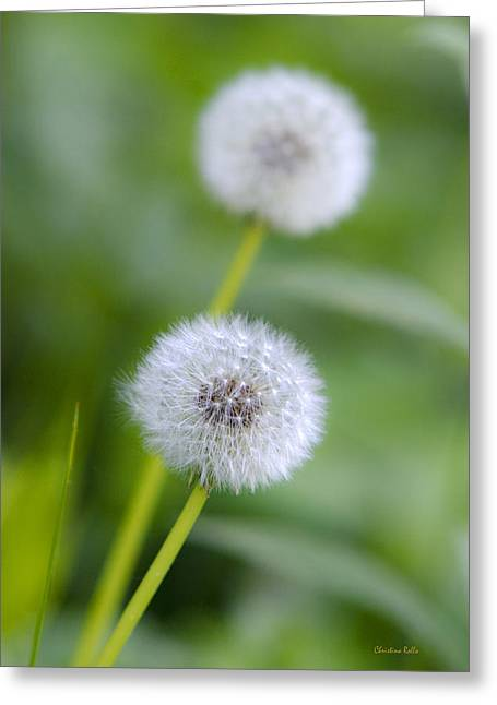 Mother Gift Greeting Cards - Make A Wish Dandelion Greeting Card by Christina Rollo