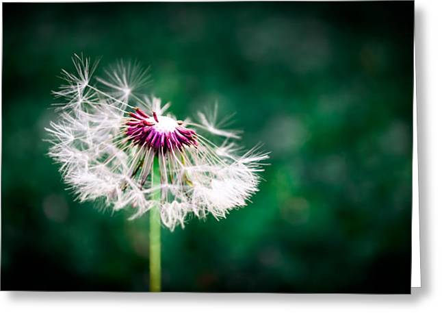 Lush Green Greeting Cards - Make A Wish Greeting Card by Shelby  Young