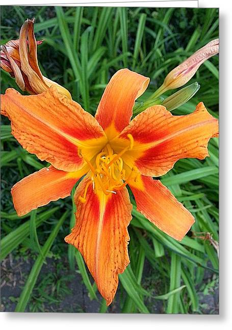 Sienna Greeting Cards - Make My Daylilly Greeting Card by John Savala