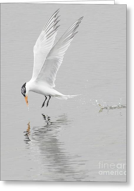 Tern Greeting Cards - Making a Tern Greeting Card by Ruth Jolly