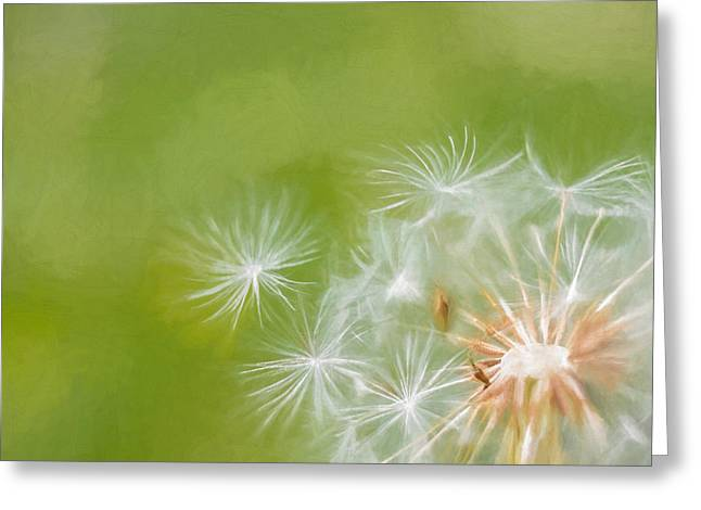 Weed Line Greeting Cards - Making Wishes Dandelion Greeting Card by Terry DeLuco