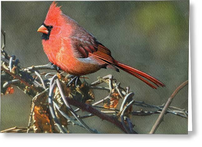 Male Cardinal Greeting Card by Ken Everett