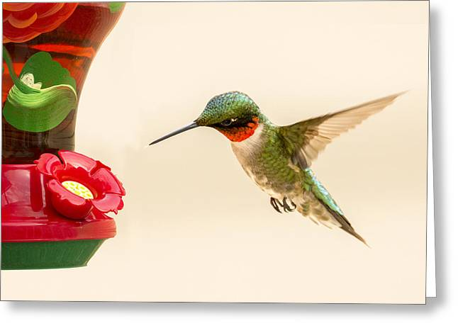 Zoology Greeting Cards - Male Ruby Throat Hummingbird 1 2015 Greeting Card by John Radosevich