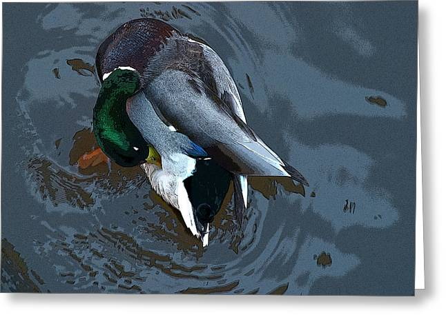 Unexpected Quality Greeting Cards - Mallard  Greeting Card by Don  Wright