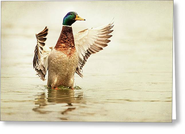 Duck Pond Greeting Cards - Mallard Greeting Card by Everet Regal