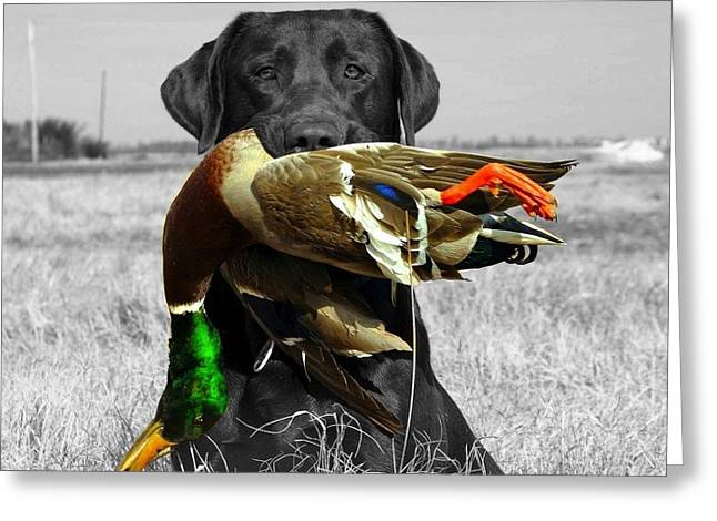 Chocolate Lab Greeting Cards - Mallard in Color Greeting Card by Stebin Horne