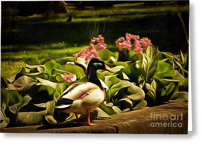 Anatinae Greeting Cards - Mallard in Retro Greeting Card by Bridget Jones