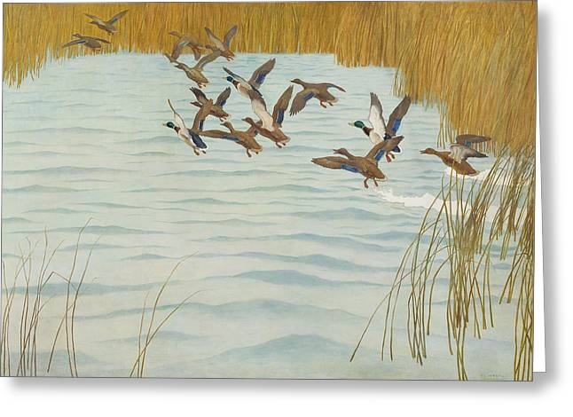 Mallards In Autumn Greeting Card by Newell Convers Wyeth
