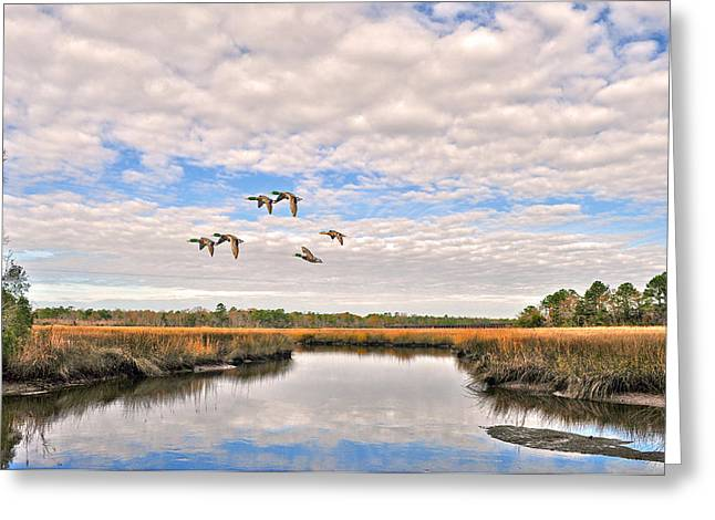 Donnie Smith Greeting Cards - Mallards In Flight Greeting Card by Donnie Smith