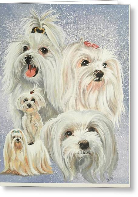 Toy Maltese Paintings Greeting Cards - Maltese Collage Greeting Card by Barbara Keith