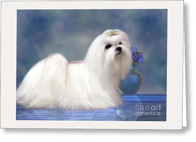 Maltese Dog Greeting Card by Corey Ford