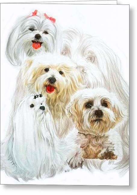 Toy Maltese Drawings Greeting Cards - Maltese w/Ghost Greeting Card by Barbara Keith