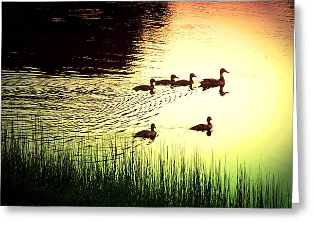 Ski Art Greeting Cards - Mama Mallard And Ducklings Greeting Card by Joyce Dickens
