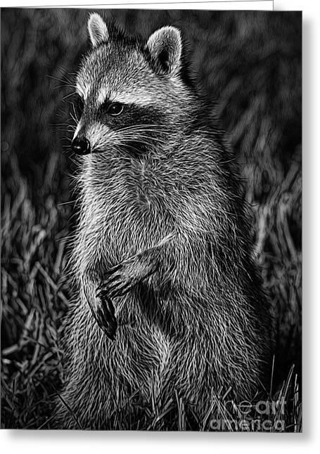 Deborah Greeting Cards - Mama Raccoon Greeting Card by Deborah Benoit
