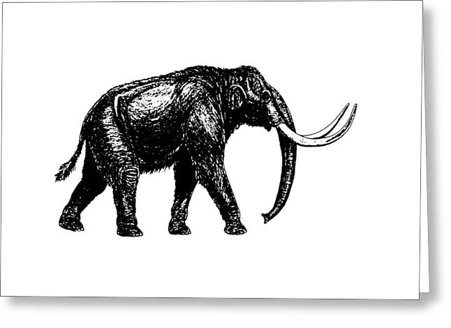 Mammoth Tee Greeting Card by Edward Fielding