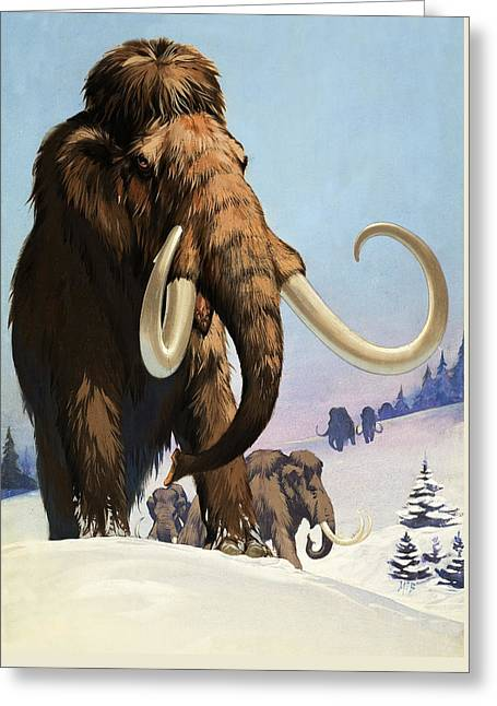 Ancestors Greeting Cards - Mammoths from the Ice Age Greeting Card by Angus McBride