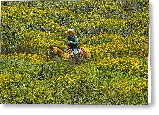 Big Sur Greeting Cards - Man on Horse in Flowers Greeting Card by Matt Daryl Ober